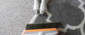 How To Vacuum Pet Hair from Carpets